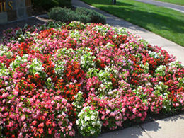 Annual and Perennial Garden Landscaping Service in St. Louis