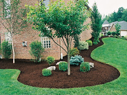 Lawn Maintenance & Lawn Care in St. Louis & St. Charles