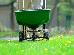 Over-Seeding | Lawn Maintenance Services