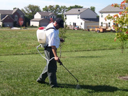 Weed and Pest Control | Lawn Maintenance Services