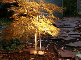 Landscape Lighting Service in St. Louis, MO